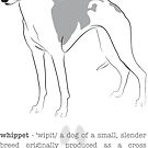 Whippet by grumpyteds