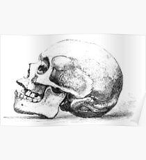 Zeichnung Totenkopf seitlich Poster