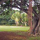 Weeping Tree by Bradley Old