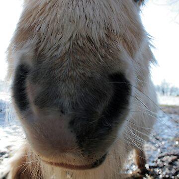 Wee Pony.  Big Face. by RedShedArt