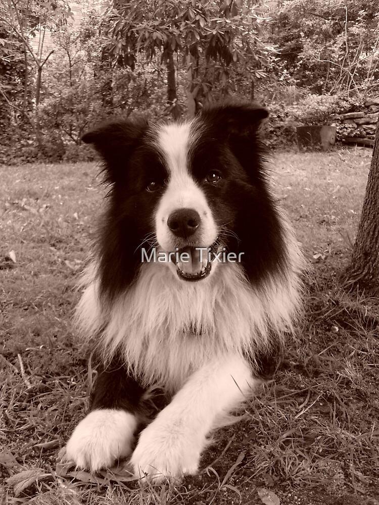 shamus frisbee dog by Marie Tixier