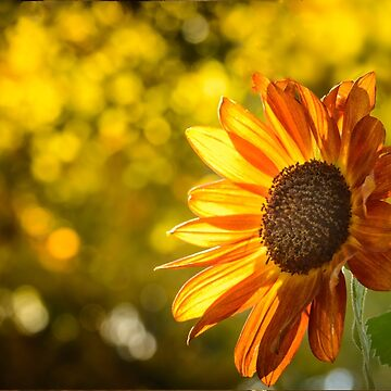 Everning sun by LudaNayvelt