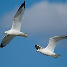 Flight of the Seagulls by Bonnie T.  Barry