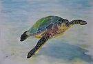 Green Sea Turtle by Paul Gilbert