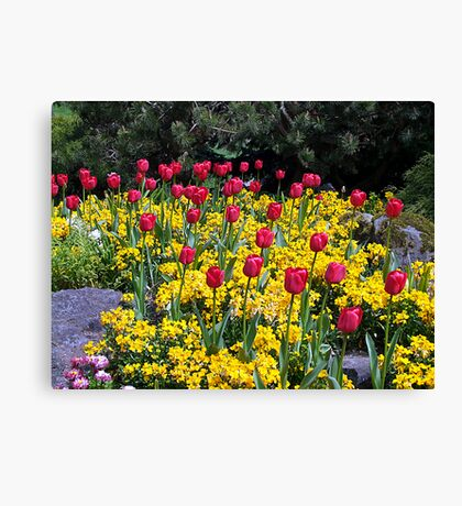 Tulips On Display Canvas Print