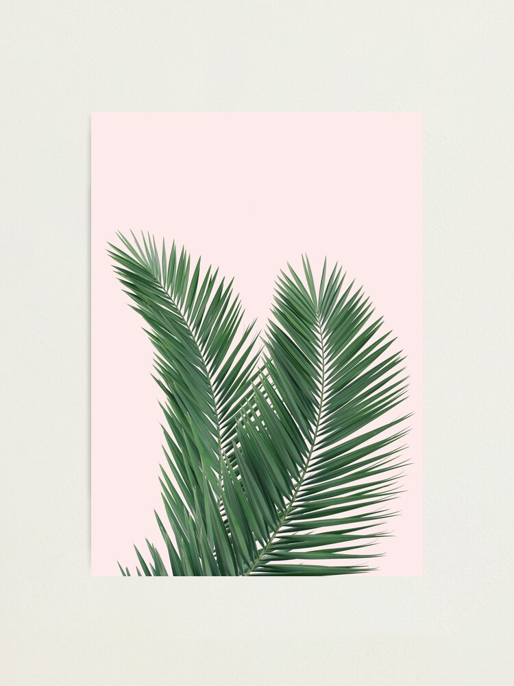 Alternate view of Palm leaves, tropical leaves pink background Photographic Print
