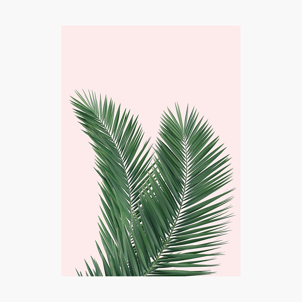 Palm Leaves Tropical Leaves Pink Background Poster By Nth4ka Redbubble Blue, red, and pink swiss cheese leaves print textile. redbubble