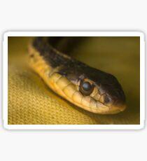 Eastern Garter Snake Sticker