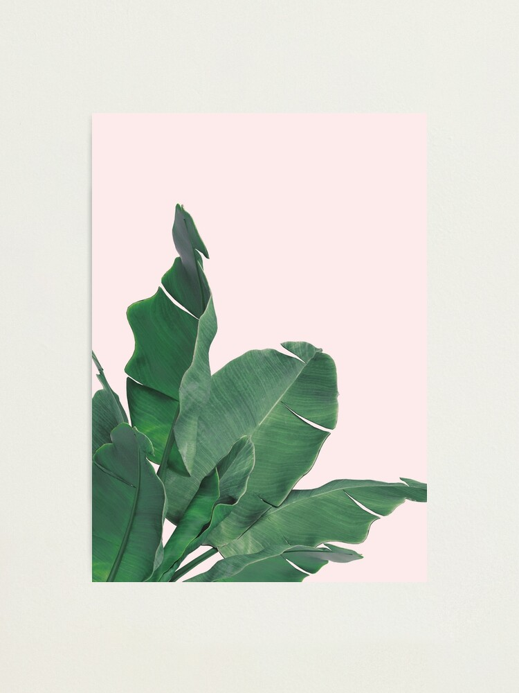 Alternate view of Banana leaves tropical leaf Photographic Print