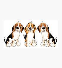 Three Cute Beagles Photographic Print