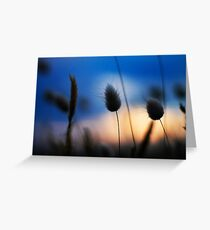Salix Sunset Greeting Card
