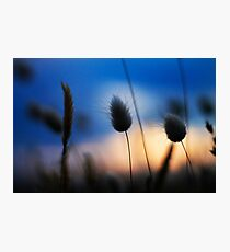 Salix Sunset Photographic Print