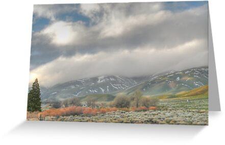 Californian Landscape by Shaina Haynes
