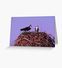 Osprey nest  Greeting Card