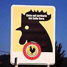 Gallo Nero by phil decocco