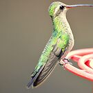 Hummingbird 2 by loiteke