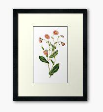 Simple Flowers Framed Print