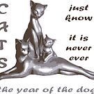 Cats Just Know It Is Never Ever The Year Of The Dog by taiche