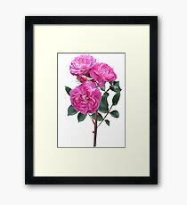 Rosé Framed Print