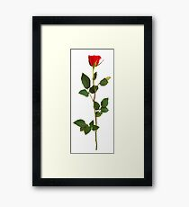 Simple Rosé Framed Print