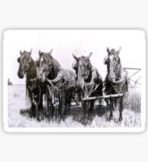 Sam, Frank, Dan, and Dick 1920 Farm Horses Sticker