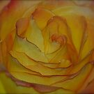 Spiral Rose Petals by Pamela Hubbard