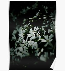 Dark Floral Photography - White Flowers 1  Poster