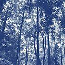 Woodland Canopy - Cyanotype Effect by Artberry