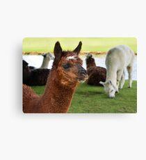 Alpaca Print Sticker T Shirt For Kids Men Women Real Realistic Photo Notebook Mugs Travel Cup Travel Mug Pillow Graphic Shirt lama Llama Canvas Print