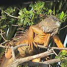 Orange Iguana by brendalynn52