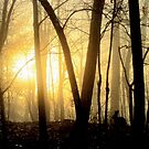 Nibbling Bunny Meets Morning Sun in Foggy Forest by Jean Gregory  Evans