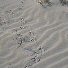 Wandering Bird-feet by Kinniska