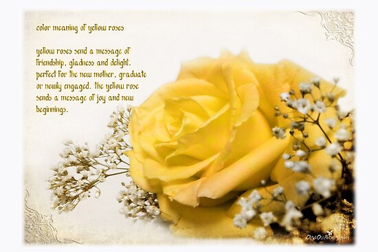 Yellow rose photographic prints by olga redbubble yellow rose by olga mightylinksfo