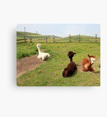 Alpaca Print T Shirt For Kids Men Women Real Realistic Photo Mugs Travel Cup Travel Mug Graphic Shirt lama Llama Lamma Canvas Print