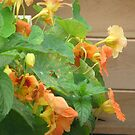 Edible Flowers by Kinniska