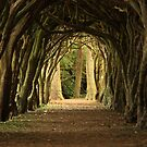 Cloister at Gormanston College by Martina Fagan