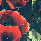Poppies by Jean Boileau