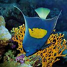 Kaiserfische | Ich bin der Kaiser in meinem Revier von Ute Niemann