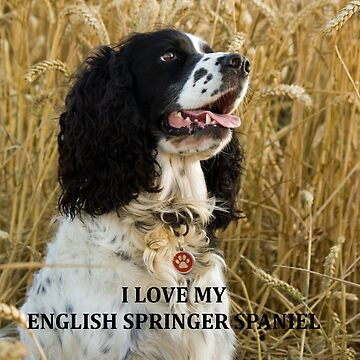 english springer spaniel black and white love with picture by marasdaughter