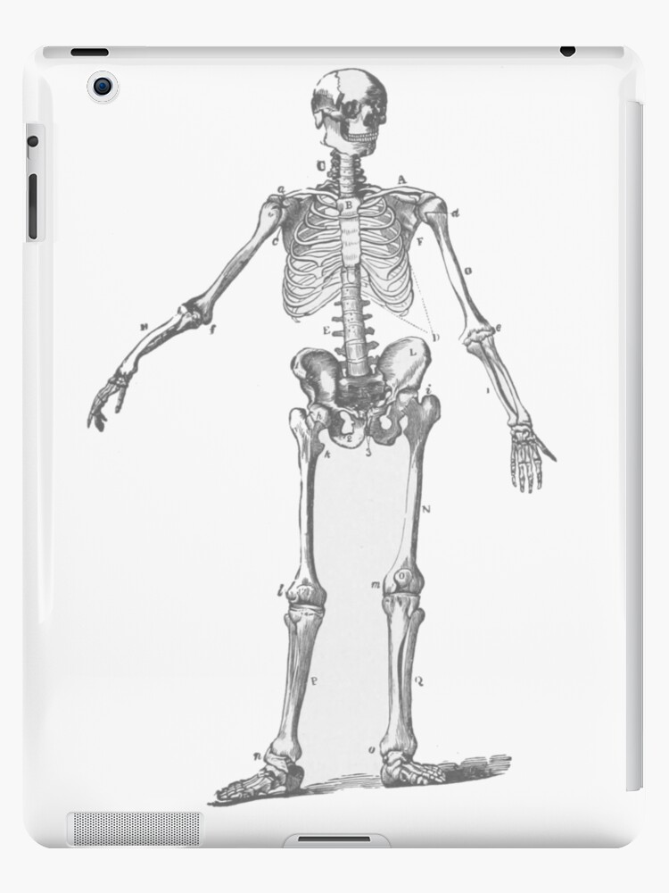 Vinilos y fundas para iPad «El esqueleto humano como un dibujo de ...