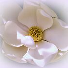 Southern Magnolia by Zina Stromberg