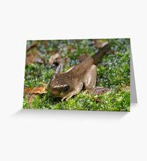 Peron's Tree Froglet Greeting Card