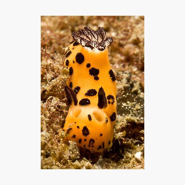 Nudi Photographic Print