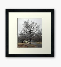 Frozen tree Framed Print