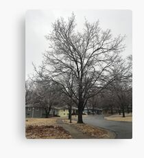Frozen tree Canvas Print
