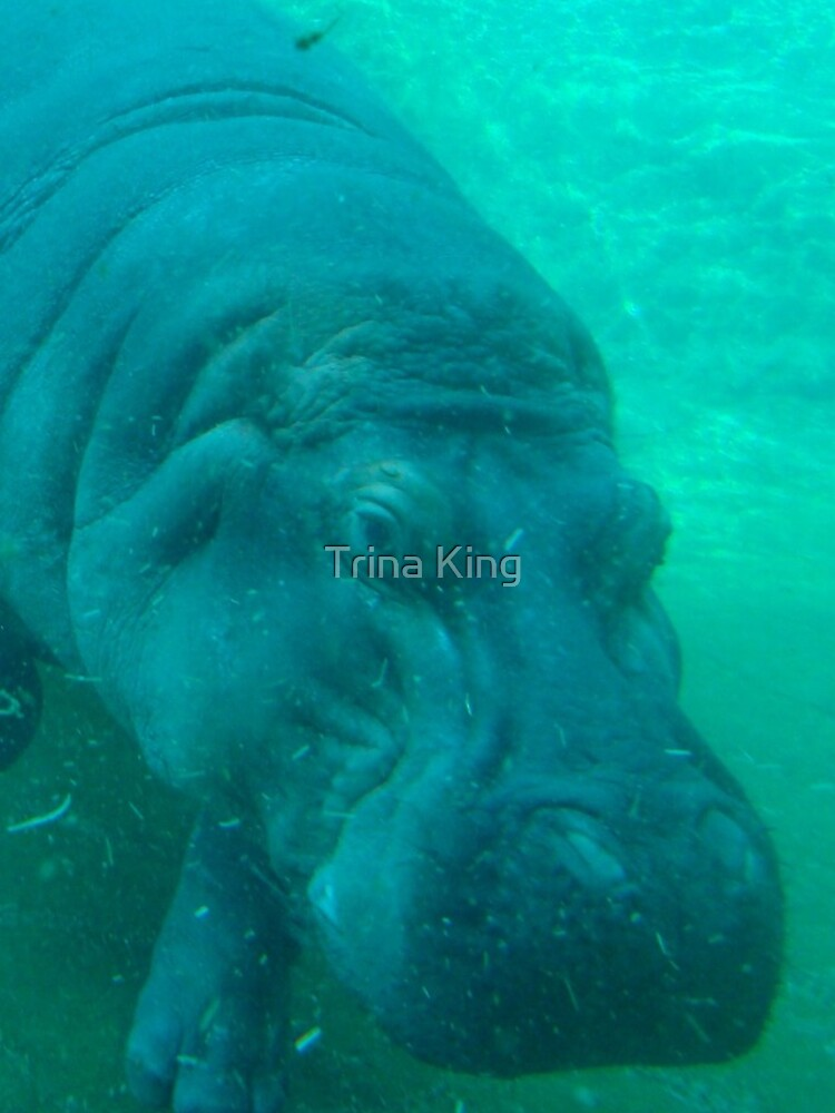 hippo love von trinaking