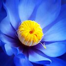 Blue Yellow by Cliff Vestergaard