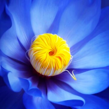 Blue Yellow by Cliff