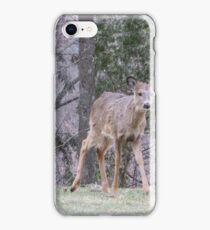 Okauchee Lake Deer iPhone Case/Skin