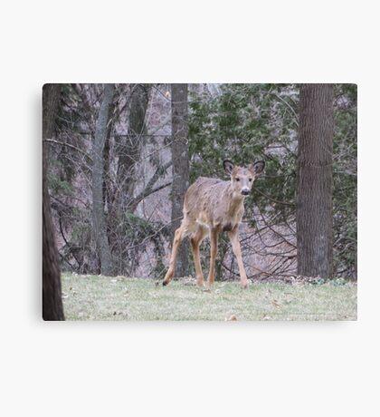 Okauchee Lake Deer Canvas Print